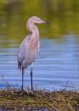Wild Florida 2008