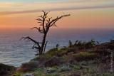 7D_1708 - Lone Tree at Dusk