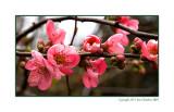 Spring is arriving 2011