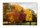 Castle Park Colchester 2011