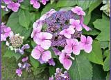Janette's Summer Garden 2012