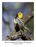 Black-throated Green Warblers