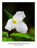 Flower/Plant-001