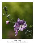 Flower/Plant-002