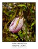 Flower/Plant-004