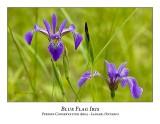 Flower/Plant-006