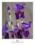 Flower/Plant-011