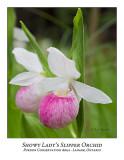Flower/Plant-015