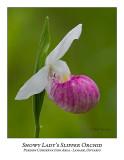 Flower/Plant-018