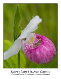 Flower/Plant-019