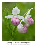Flower/Plant-022