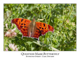 Ottawa And Area Butterflies