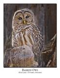Barred Owl-001