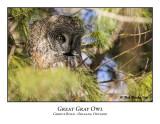 Great Gray Owl-003