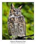 Great Horned Owl-001