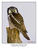 Northern Hawk-Owl-005