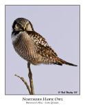 Northern Hawk-Owl-006