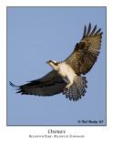 Osprey-005