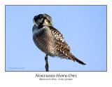 Northern Hawk-Owl-007