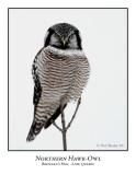 Northern Hawk-Owl-010