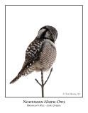 Northern Hawk-Owl-011
