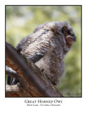 Great Horned Owl-006