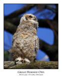 Great Horned Owl-009