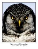 Northern Hawk-Owl-018
