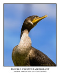 Double-crested Cormorant-005