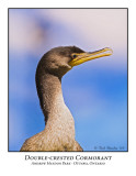 Double-crested Cormorant-006