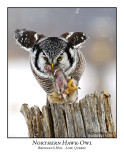 Northern Hawk-Owl-021