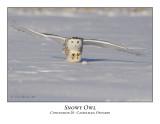 Snowy Owl-015
