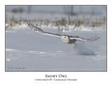 Snowy Owl-017