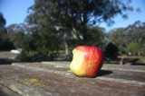 An Apple + Tree