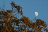 Wooglemai - Moon in the morning Sun
