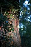 Wooglemai - Bush Fire Scar on tree