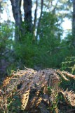 wooglemai - Ferns sunbasking