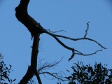 Wooglemai - Blue Sky