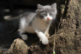 The Cats of Finca Hijuela 2011-06