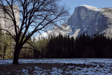 Half Dome from Curry Meadow