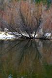 Tenaya Reflection