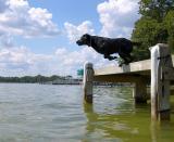 Sammy Jumping