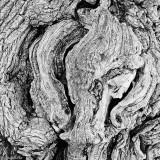 12-025 Wood