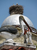 Storks on a church roof