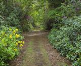 Rhodedendron Walk