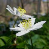 La flore du Bourg