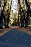 18131 09:12 Day 2 - The Autumn Path