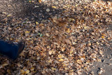 18134 09:13 Day 2 - Kicking The Leaves