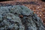 18148 09:21 Day 2 - Lichen Rocks