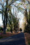 18150 09:23 Day 2 - Avenue Of English Elms